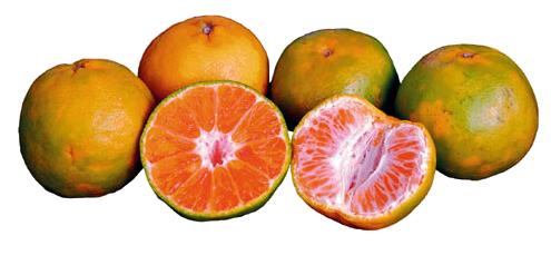 Kandungan Nutrisi dan Manfaat Jeruk Keprok Bagi Kesehatan