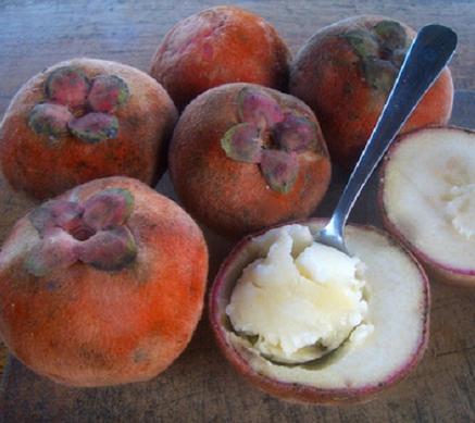 khasiat-dan-kandungan-gizi-pada-buah-langka-bisbul